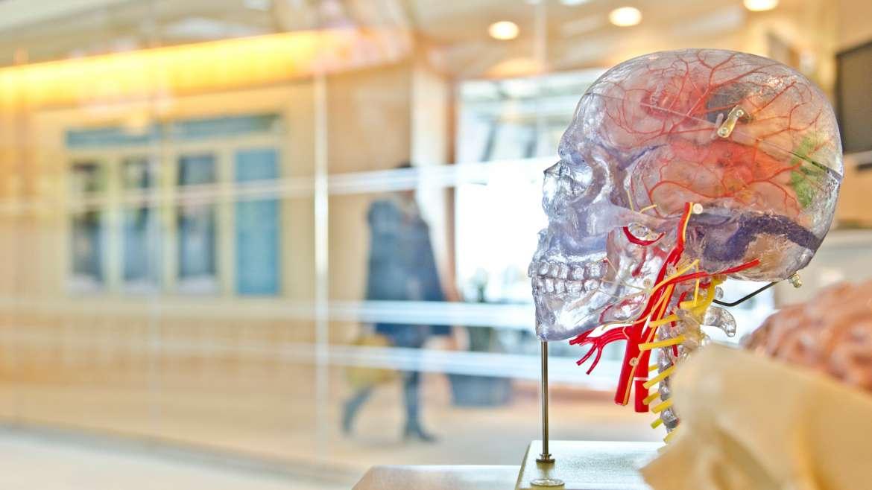 TBI may increase risk for dementia, Alzheimer's disease
